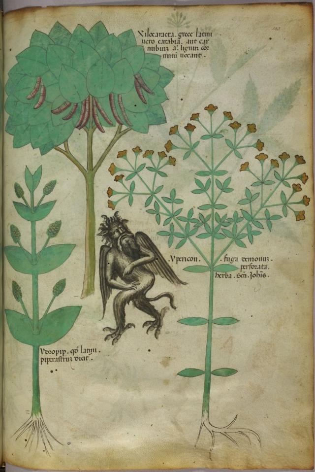 Italian 15 c manuscript image of St Johns Wort