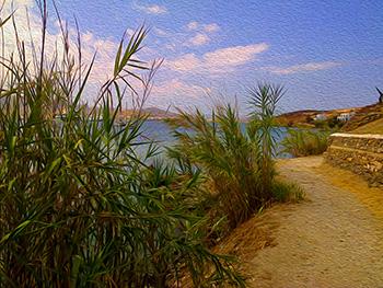 Bamboo, Paros