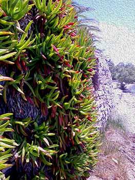 Paros Plant
