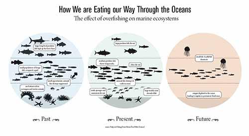 infographic fish