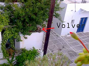 Volver on roof