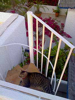 Volver on the stairs