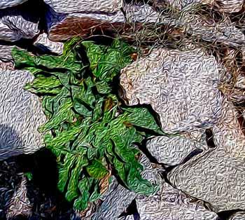 wild plant, Paros