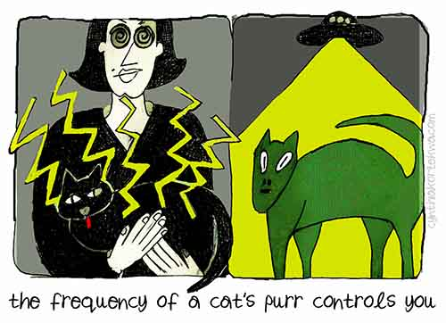 The Frequency of A Cat's Purr