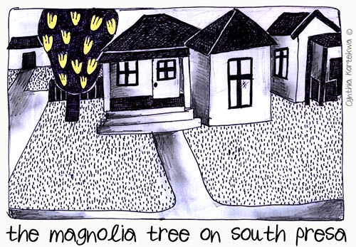 the magnolia tree on south presa