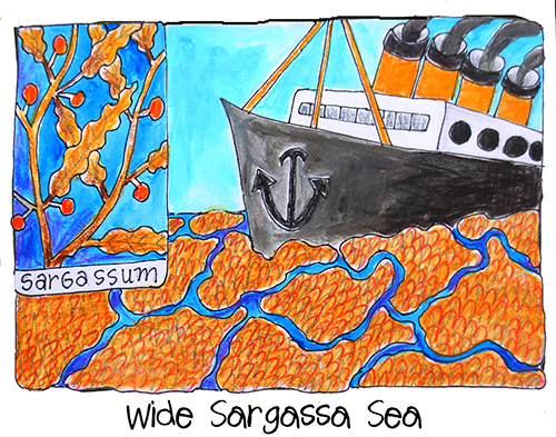 Wide Sargassa Sea