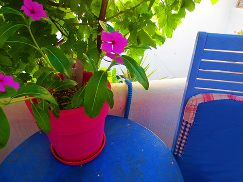Balcony Periwinkle