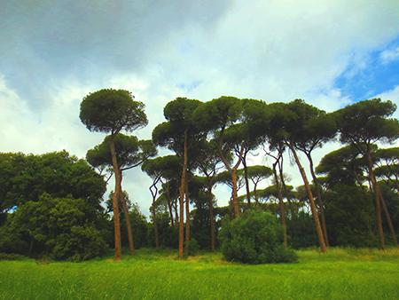 Villa Ada, Roma